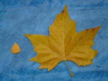 leaves-79990_1920